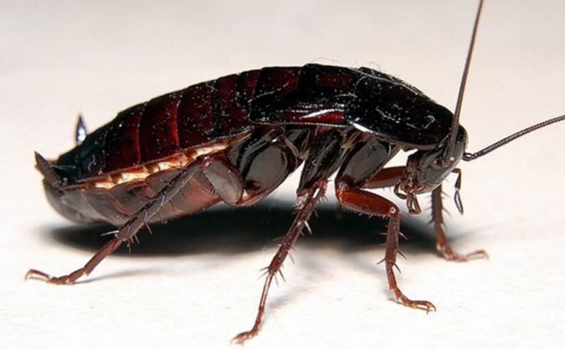 Изтребете хлебарките завинаги