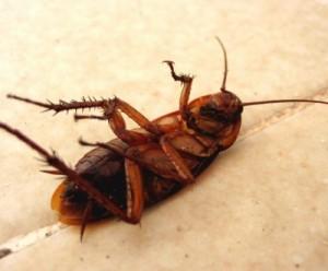 хлебарките